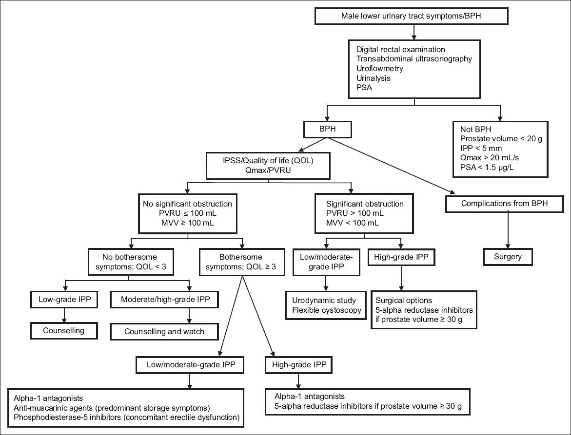 Bph Benign Prostatic Hyperplasia Ipp Intravesical Prostatic Protrusion Ipss International Prostate Symptom Score Mvv Maximum Voided Volume Psa