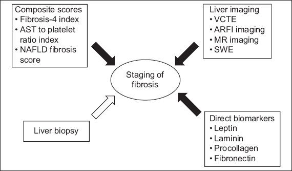 A practical clinical approach to liver fibrosis | SMJ